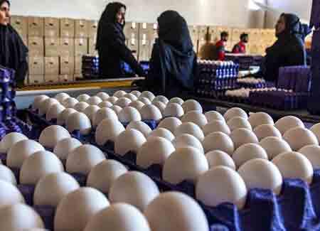 وعده کاهش قیمت تخم مرغ تا 2 هفته آینده